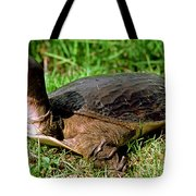 Florida Softshell Turtle Apalone Ferox Tote Bag