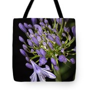 Flower- Agapanthus-blue-buds-one-flower Tote Bag