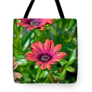 Flower Astra Outback Purple Art Prints Tote Bag
