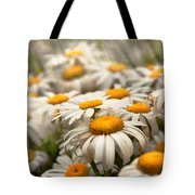 Flower - Daisy - Not Quite Fresh As A Daisy Tote Bag