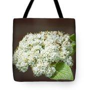Flower In The Spotlight Tote Bag