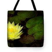 Flower - Lily - Morning Showers Tote Bag