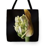 Flower-white-agapanthus-bud Tote Bag
