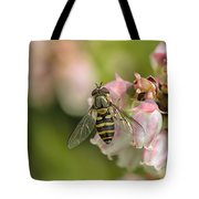 Flowerfly Pollinating Blueberry Buds Tote Bag