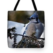 Fluffy Blue Jay Tote Bag