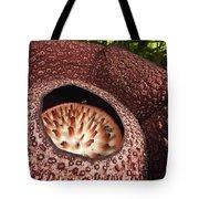 Fly Pollinating Rafflesia Sabah Borneo Tote Bag