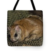Flying Squirrel On The Feeder Tote Bag