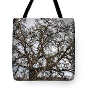 Folsom Old Oak  Tote Bag