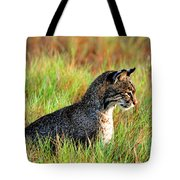 Food In Sight  Tote Bag