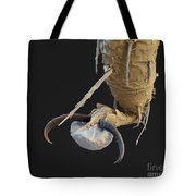 Foot Of A Bat Tick Sem Tote Bag