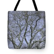For The Love Of Trees - 2  Tote Bag