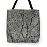 For The Love Of Trees - 2 - Monochrome  Tote Bag