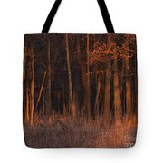 Forest At Sunset Tote Bag