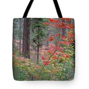 Forest Autumn Tote Bag