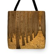 Forest Cathedral - One Tote Bag
