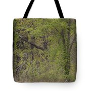Forest Glimpse Tote Bag