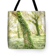 Forest Glow - The Magical Trees Of The Los Osos Oak Reserve Tote Bag