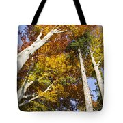 Forest In Autumn Bavaria Tote Bag