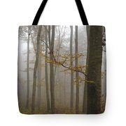 Forest In Autumn Tote Bag by Matthias Hauser