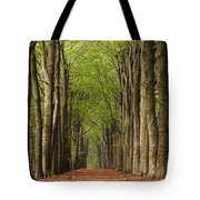 Forest In The Fall Tote Bag
