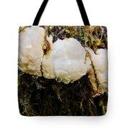 Forest Mushroom Trio Tote Bag
