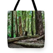 Forest Of Cathedral Grove Collection 2 Tote Bag