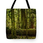 Forest Of Cathedral Grove Collection 3 Tote Bag