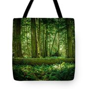 Forest Of Cathedral Grove Collection 7 Tote Bag