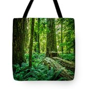 Forest Of Cathedral Grove Collection 8 Tote Bag