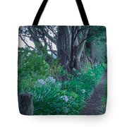 Forested Path Tote Bag