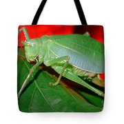 Fork-tailed Bush Katydid Tote Bag
