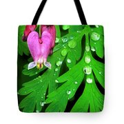 Formosa Bleeding Heart On Ferns Tote Bag