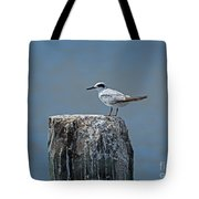 Forster's Tern Tote Bag