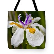 Fortnight Lily - African Iris Tote Bag