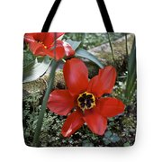Fosteriana Tulips Red Emperors Tote Bag
