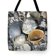Four Beautiful Shells Tote Bag