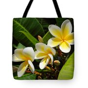 Four Summer Frangipanis Tote Bag