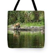 Fox At Water Hole Tote Bag