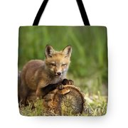 Fox Pup In The Morning Light Tote Bag