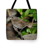 Fox Sparrow Tote Bag