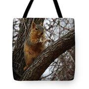 Fox Squirrel 1 Tote Bag