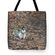 Fox Squirrel Curious Tote Bag