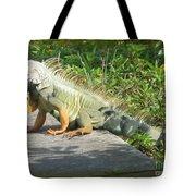 Framed Iguana Tote Bag