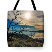 Frary Trail Trees Tote Bag