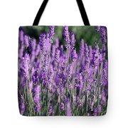 Fresh Lavender  Tote Bag