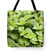 Fresh Mint Tote Bag