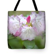Frilly Pinks Tote Bag
