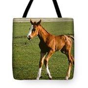 Frisky Colt Tote Bag