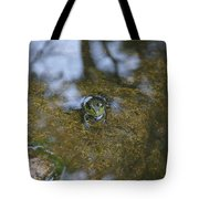 Frog In A Pond Tote Bag