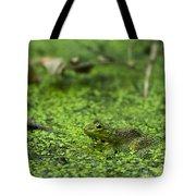 Frog In Swamp 2 Of 3 Tote Bag